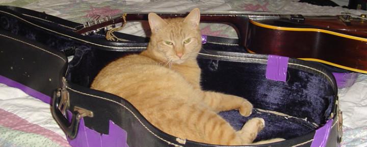 CAT N ROLL